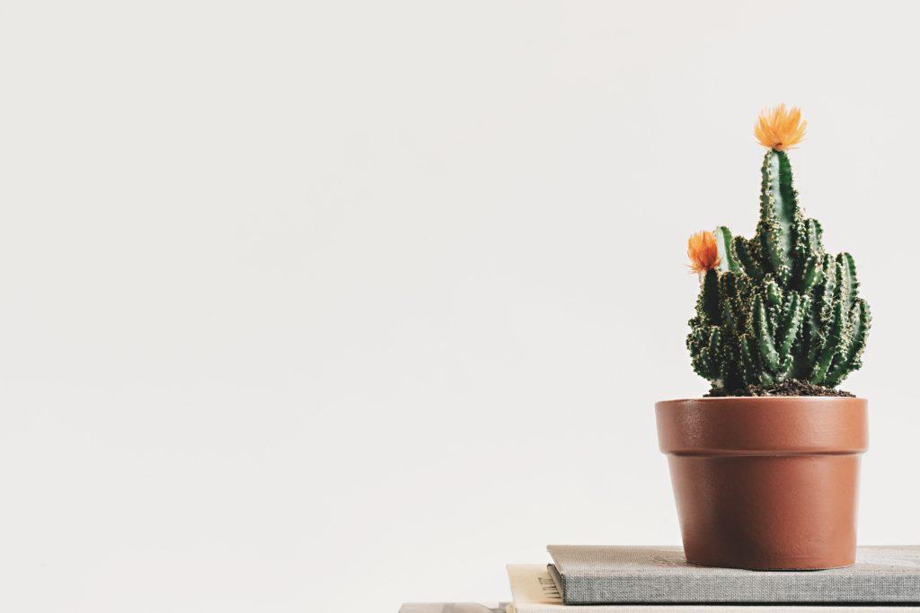 百均の観葉植物を買ってみてどう?