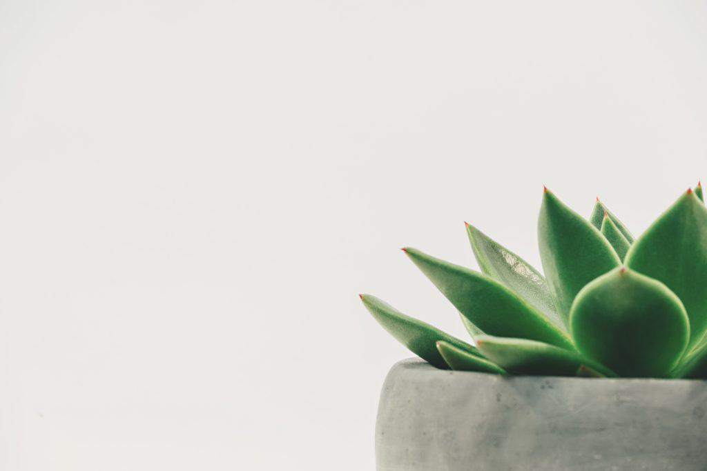 中高生で部屋をおしゃれにしたいなら百均の観葉植物!【安いけどおすすめ】
